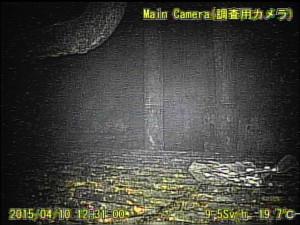 Ein Screenshot aus dem Video: Die innere Reaktorprimärsicherheitshülle wird untersucht. Hier hat es 9,5 Sv/h, ein Mensch wäre in eine Stunde tot!  | ©: TEPCO & Internationales Forschungsinstitut für Stilllegung kerntechnischer Anlagen