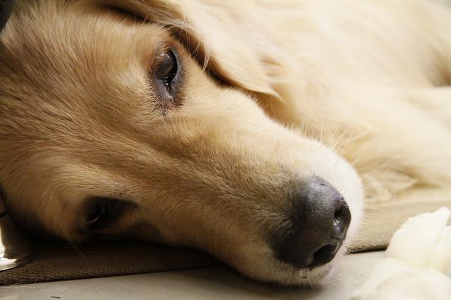 hund 1440170877