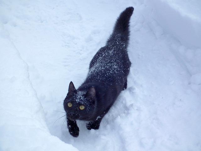 So wie diese Katze sieht unser Gast aus