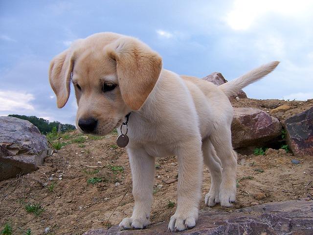 Hunde Welpe 1449566841