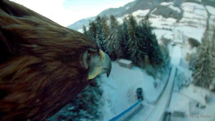 Eagle Cam-Aufnahmen von Filmadler in Wie Brüder im Wind