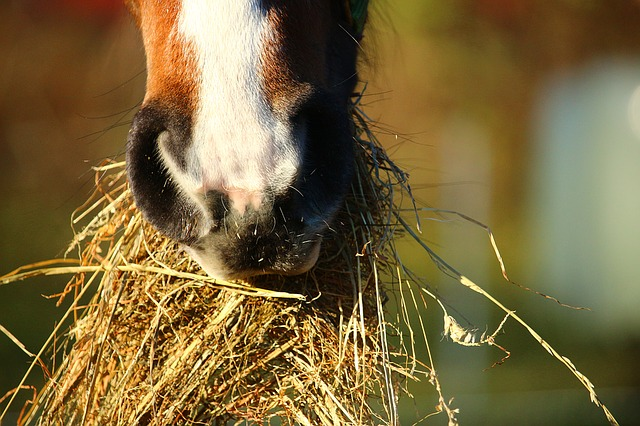 pferde 1451646274