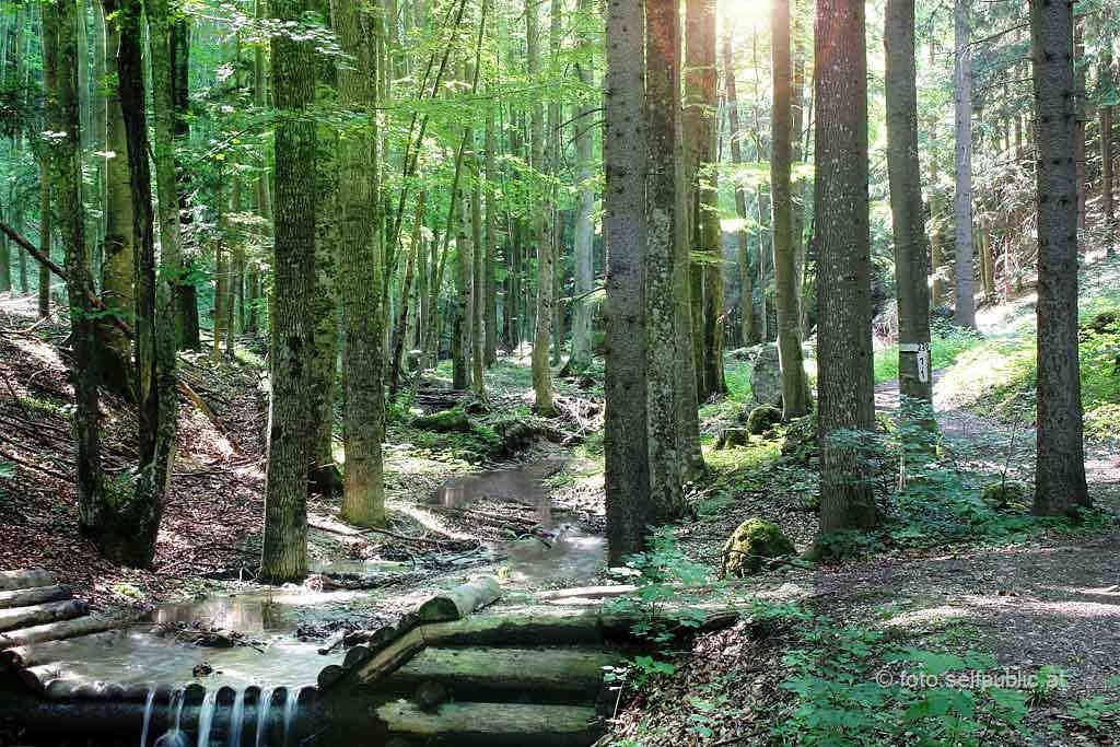 Wasser, Wald und Wetter in der Steinwandklamm