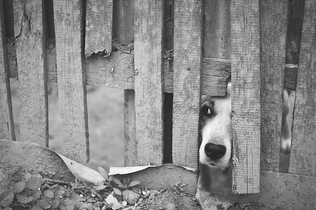 hund 1459015587
