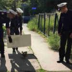 Polizei und Entenfamilie