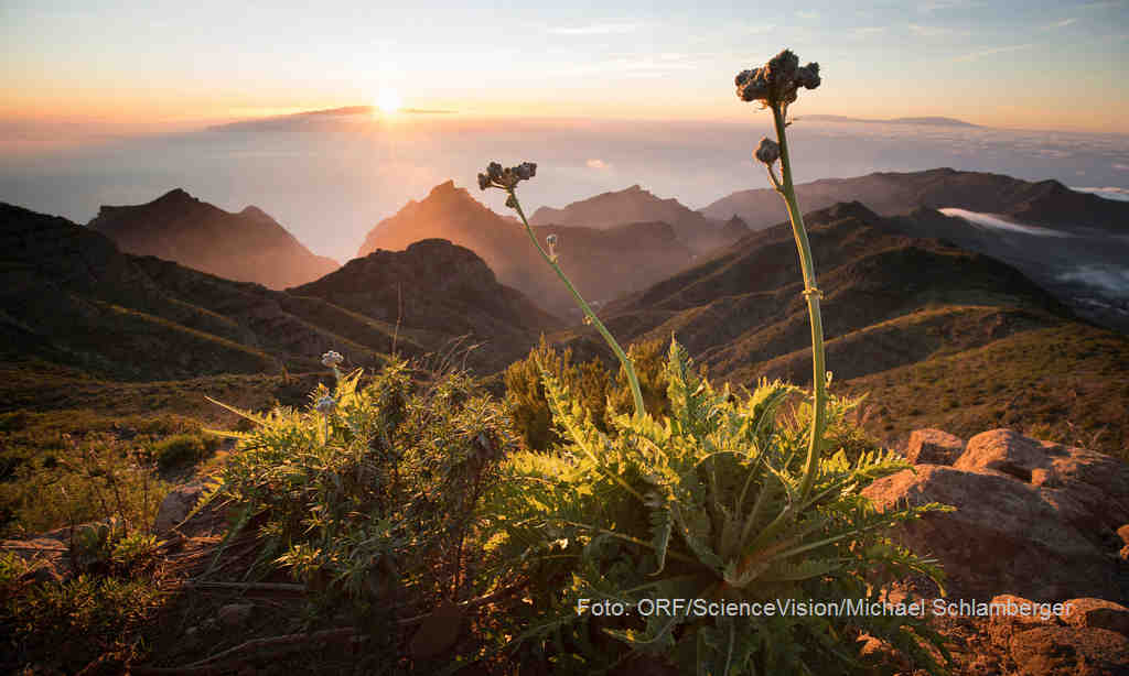 Die Kanarischen Inseln - Im Reich der Feuerberge