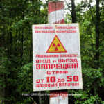 Radioaktive Wölfe in Tschernobyl
