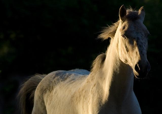 pferd 1486467776