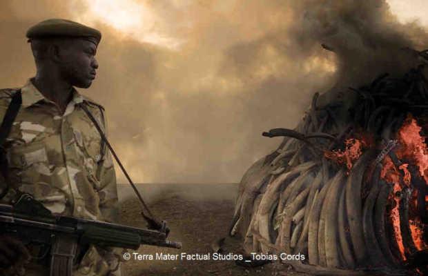 Cinema for Peace Award an Terra Mater Factual Studios