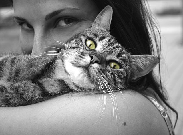 Katze 1491986926