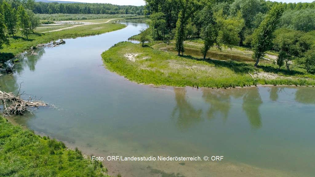 Ein Fluss lebt auf - die Revitalisierung der Traisen in Niederösterreich