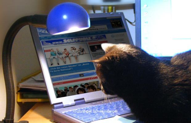 Katze Kipferl liest News auf Zeit im Blick