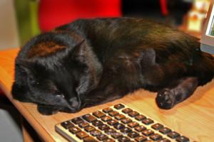 Katze Kipferl bei der Arbeit ...