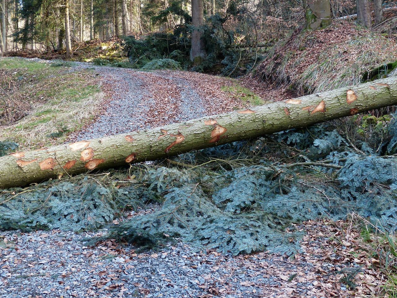 Waldarbeiten 1519477241