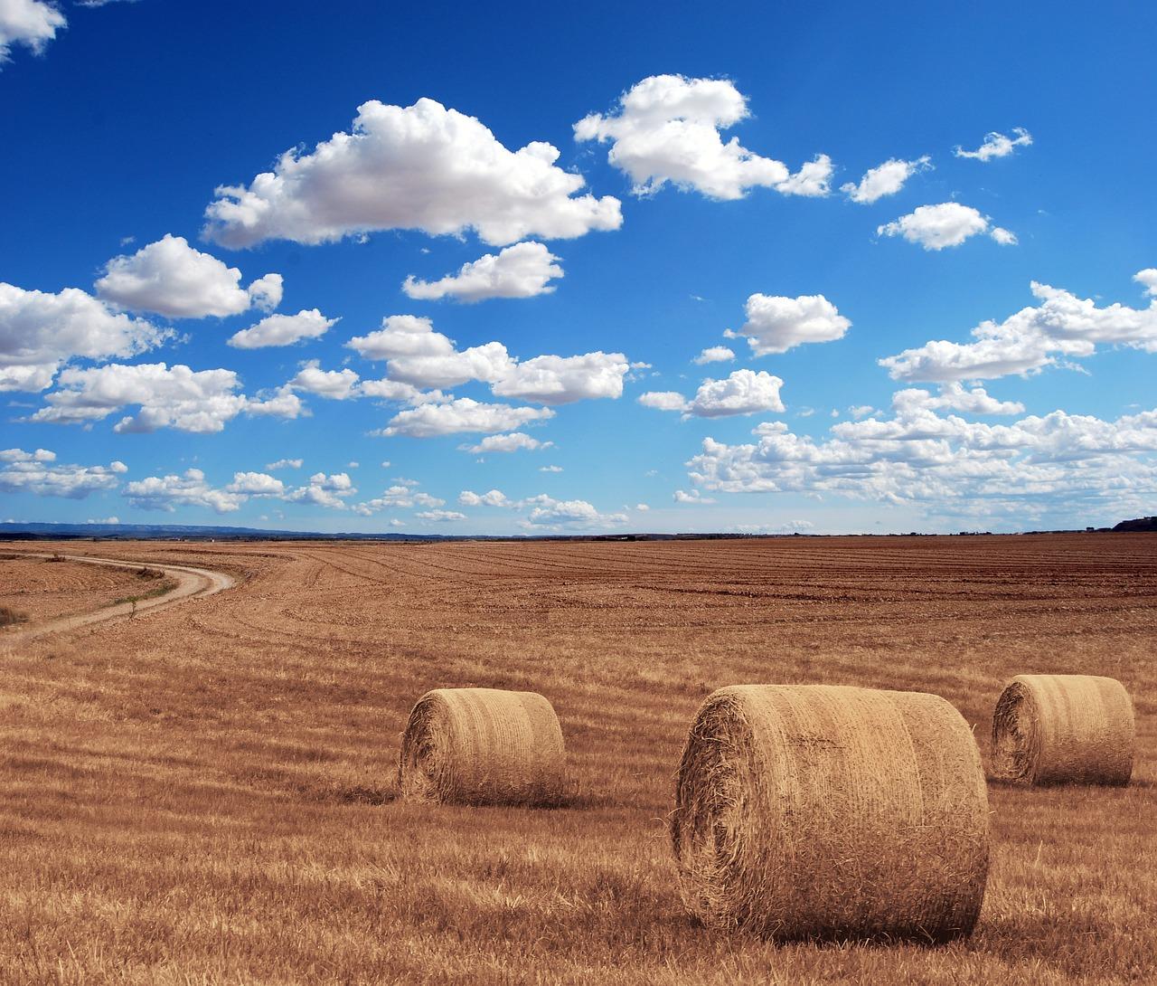 Landwirt 1527166422