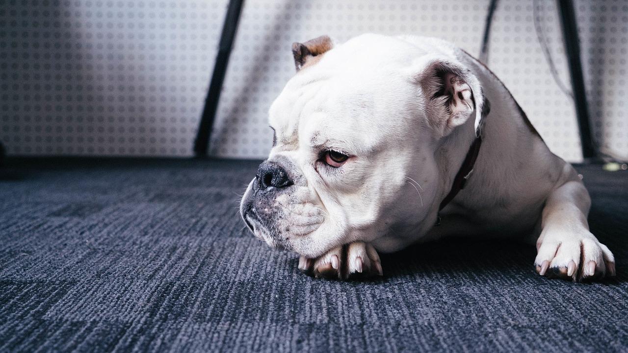 Hund 1538299616