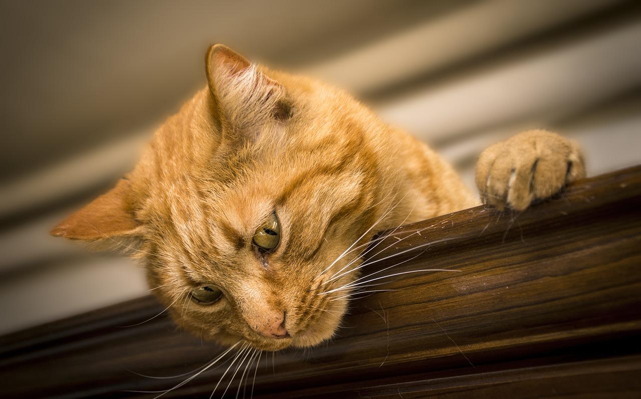 Katze 1537609790