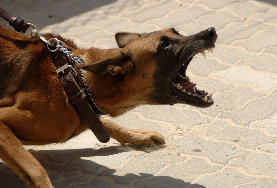 Gesetzeslücke bei Hundhaltung