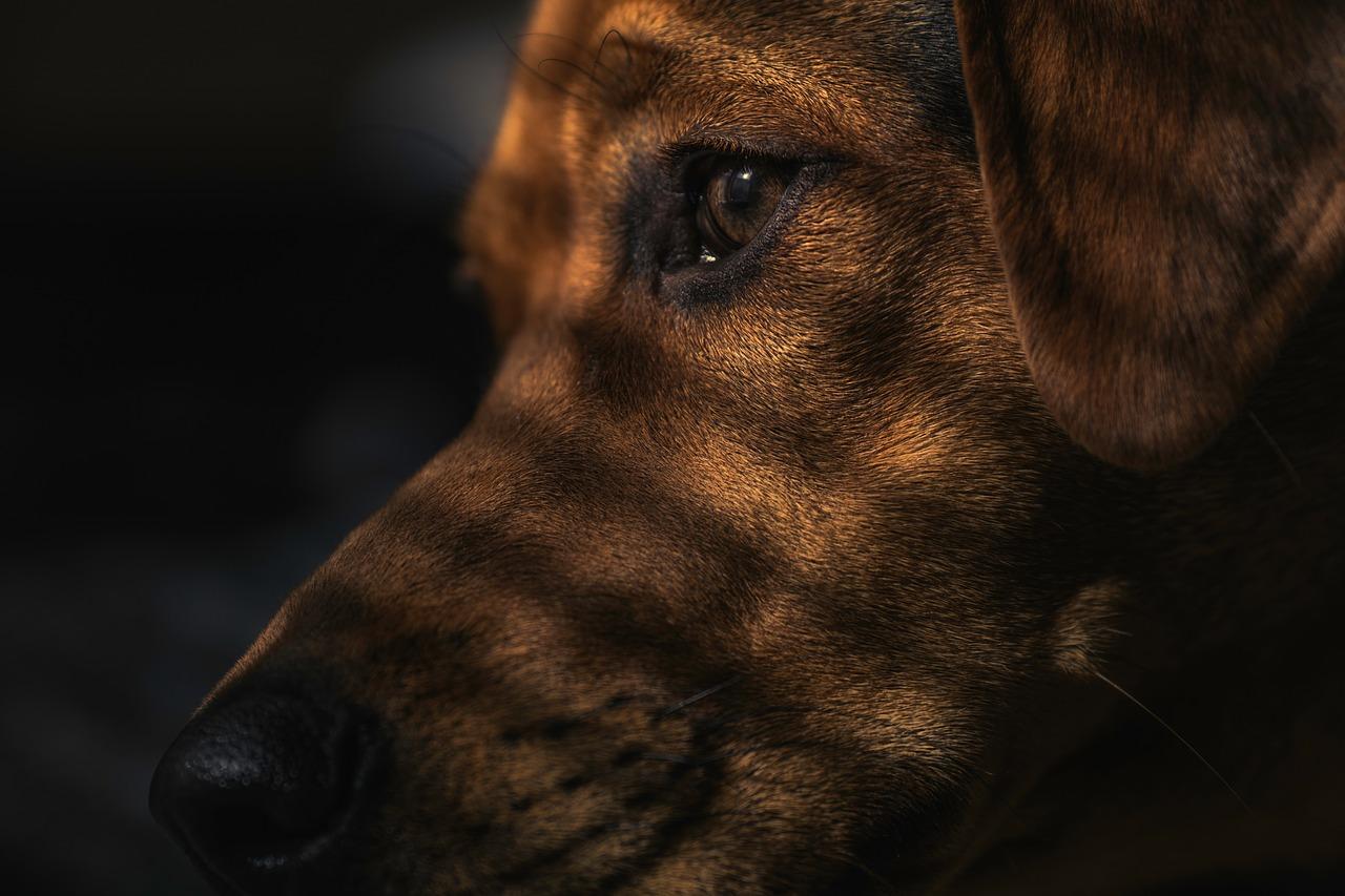 hund 1538821678