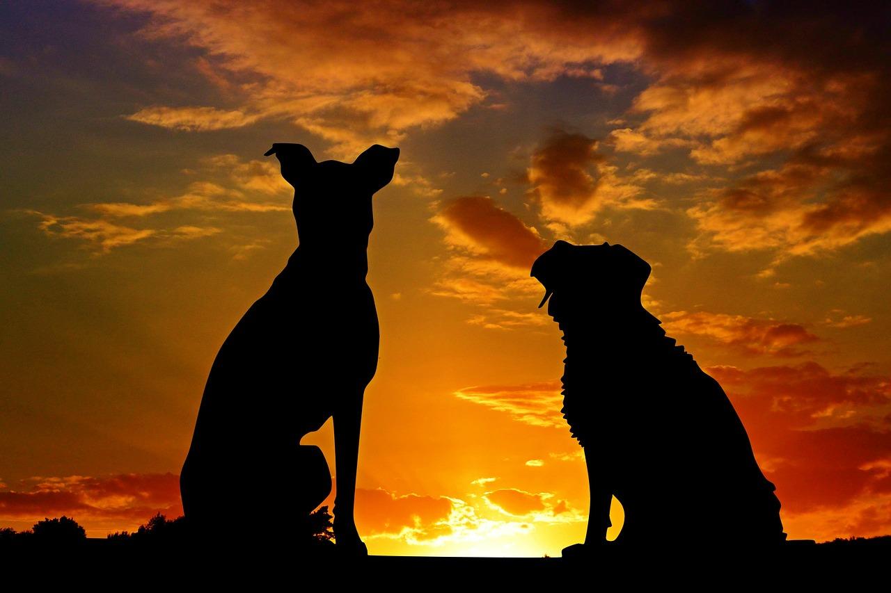 hund 1538988940