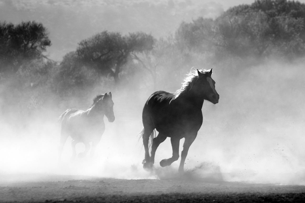 pferd 1539449340
