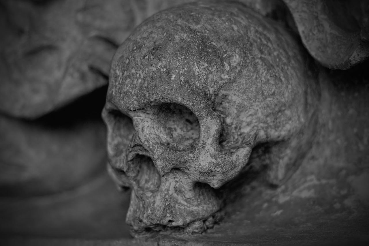 skelett 1538674144