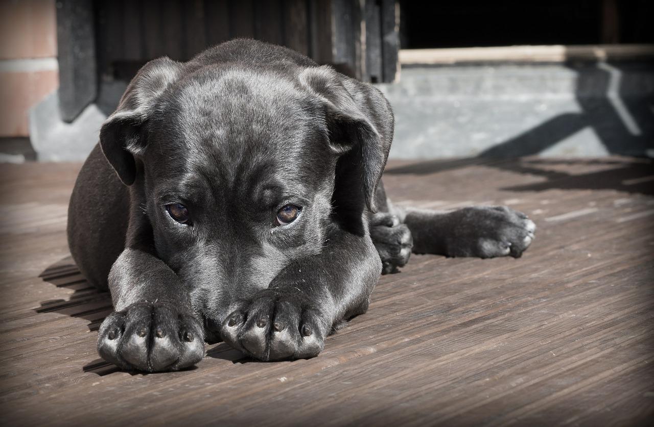 hund 1552565924