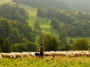 Landwirt 1556630857