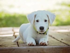 hund 1557221237