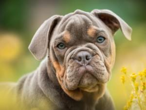 hund 1565511677