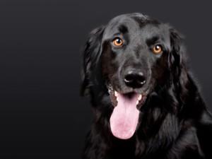 hund 1569001745