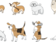 hund 1570017523