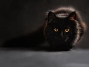 Katze 1587463912