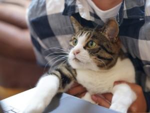 Katze 1594801557