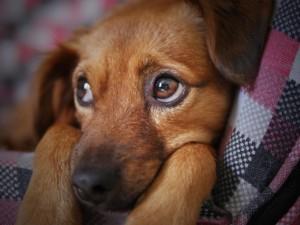hund 1594381694