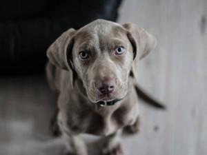 hund 1594721422