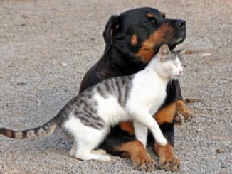 Hund oder Katze
